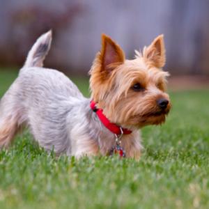 8 Month Old Puppy & 8 Month Puppy Behavior Training Guide